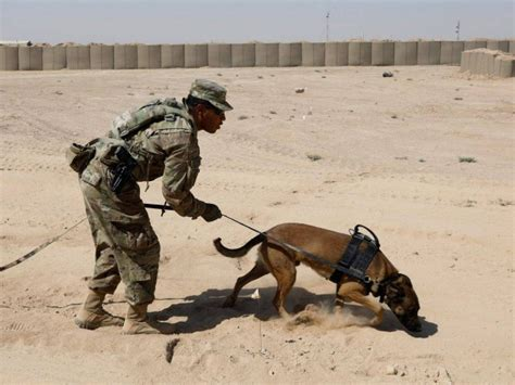 bomb sniffing dogs mistreated   military