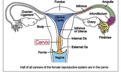 Wanita Hamil Haid Gangguan Pematangan Sel Telur Akibatkan Sulit Hamil Info