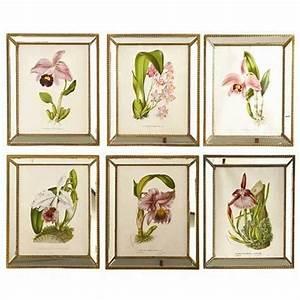 Botanical Orchid Prints Antique Style Mirror Frames