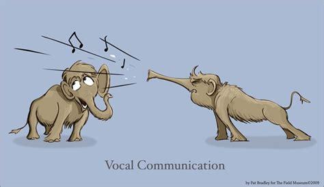 VOCAL COMMUNICATION