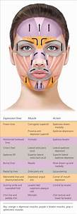 Botulinum Toxin Injection For Facial Wrinkles -