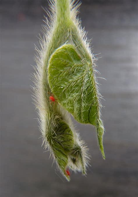 pfefferminzöl gegen mäuse hausmittel gegen spinnmilben spinnmilben bek mpfen hausmittel gegen spinnmilben spinnmilben