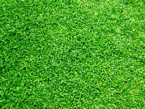 black and white wall to wall carpet 1000 beautiful grass photos pexels free stock photos