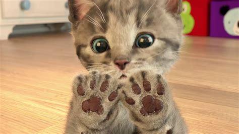 Little Kitten  My Favorite Cat  App For Kids Youtube