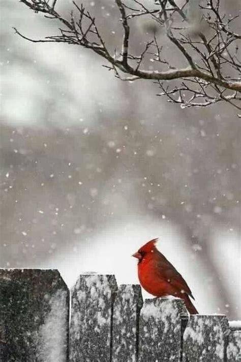 44 Winter iPhone Wallpaper HD Ideas - Winter Backgrounds