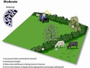 Hedgerow Management