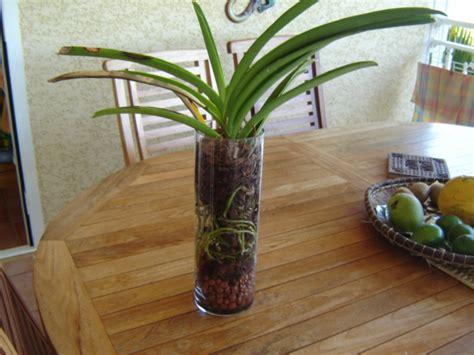 orchidee pot verre