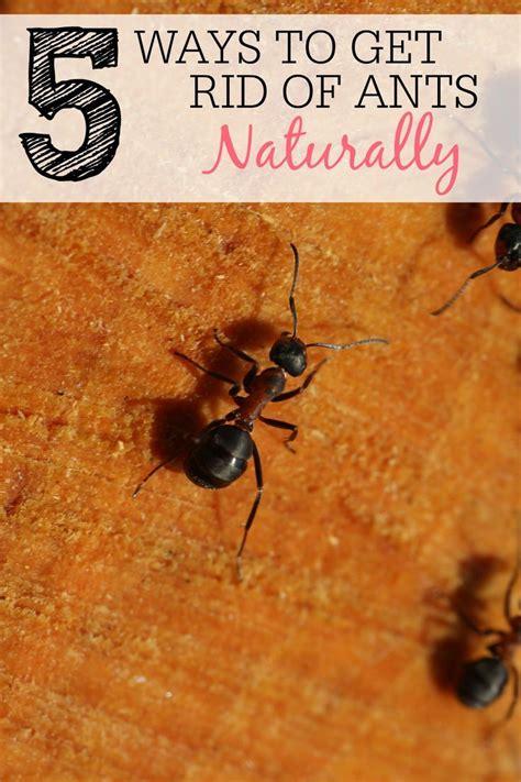 Ants In Kitchen Sink Drain  Wow Blog