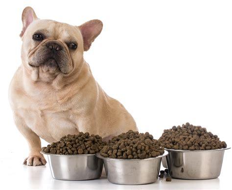 dog   picky eater  pets
