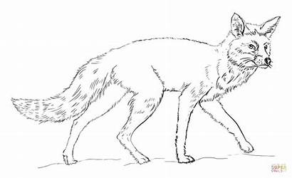 Fox Coloring Pages Printable Realistic Draw Drawing
