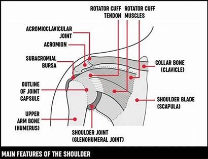 Shoulder Arm Pain Causes Symptoms Treatments Upper