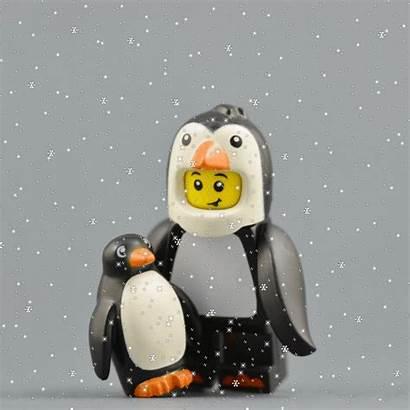 Penguin Penguins Facts Honour Water Drink Sneezing