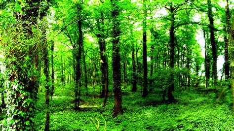 Green Forest Wallpapers  Wallpaper Cave