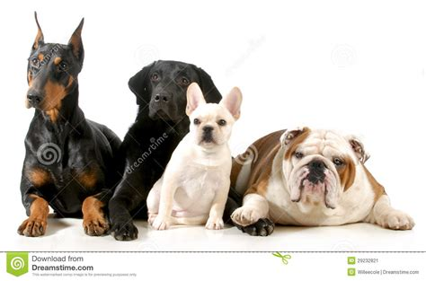 dogs stock image image