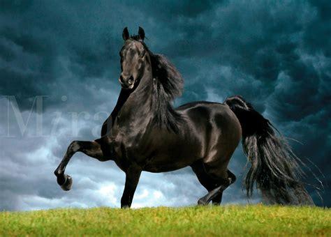 horse majestic hoof jorr team raised lightbox grade check photoshelter