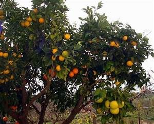 Grow Multiple Type of Fruit on One Tree Through Grafting