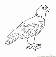Best 25+ ideas about How to Draw an Eagle | Find what you\'ll love
