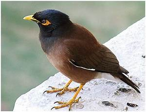 Serena's Secret Gardens: Indian Miner Birds- Where are You ...