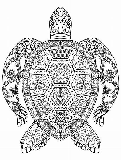 Coloring Adult Pages Completed Mandala Animal Printable