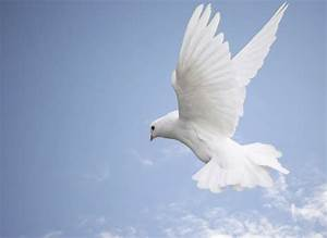 White Doves Flying | white dove so peaceful and | Recipes ...