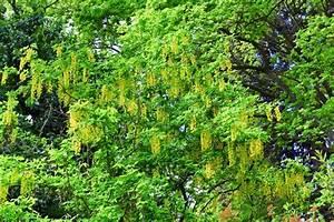 Baum Mit Blüten : bl te fr hling baum mit gelben bl ten natur hintergrund stockfoto colourbox ~ Frokenaadalensverden.com Haus und Dekorationen