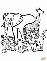 Zoo Coloring Pages Animal Animals Printable Getdrawings Toddlers sketch template