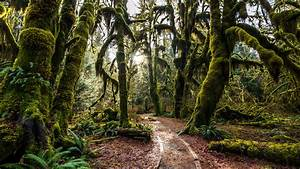 Nature Landscape Forest Trees Covered With Green Moss ...
