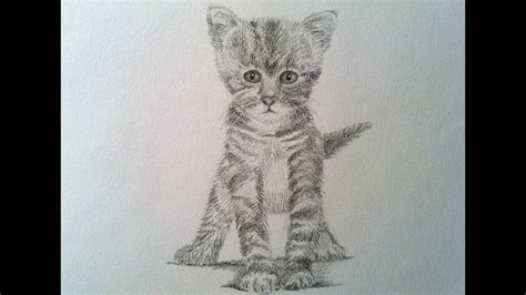 How To Draw A Realistic Cat