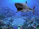 Rvack Ndscev: Gatitaserenescreen Marine Aquarium