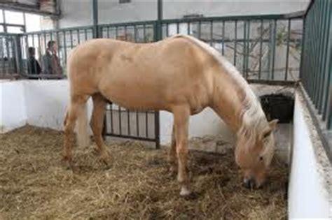 Wie Groß Sollte Eine Küche Sein by Sind Sie Ein Pferdefan