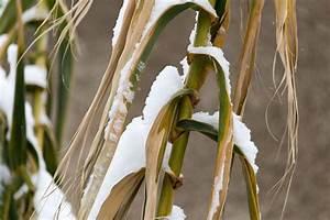 Bambus Vernichten Tipps : den bambus in der winterzeit richtig pflegen ~ Whattoseeinmadrid.com Haus und Dekorationen
