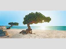 Aruba travel deals Air Canada Vacations
