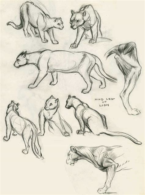 instruction clair weeks animal studies