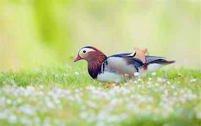 Birds Desktop Wallpapers Background Nature Windows Related