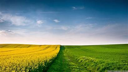 Field Summer Wallpapers Landscape Grass Background Yellow