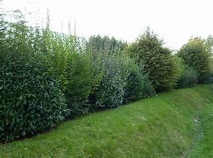 Arbuste Brise Vue : am nager un brise vue dans la jardin ~ Preciouscoupons.com Idées de Décoration
