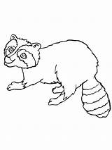 Raccoon Coloring Dog Printable Library Popular Bestcoloringpagesforkids Bag sketch template
