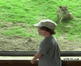 Kid vs. lion at the zoo | Best Funny Gifs and Animated ...