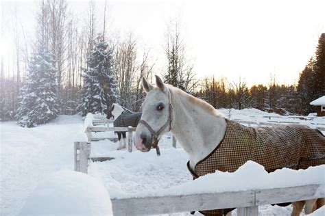 horses care cold weather sine