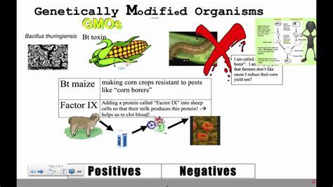 Modification Genetic Organisms by Genetically Modified Organisms Ib Biology