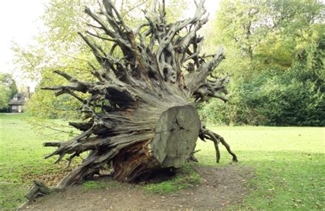 Things To Know About Tree Stump Removal In Toronto Tree