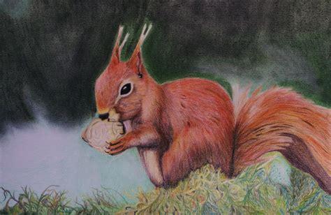 bild eichhoernchen nuss tierportrait wald von michael