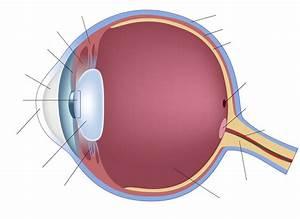 Label Eye Diagram Quiz