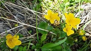Welche Blumen Kann Man Essen : butterblume welche blume versteckt sich da ~ Watch28wear.com Haus und Dekorationen