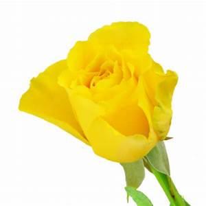 Gelbe Rose Bedeutung : einzelne gelbe rose zum geburtstag nach anlass blumenstr u e blumenversand ~ Whattoseeinmadrid.com Haus und Dekorationen