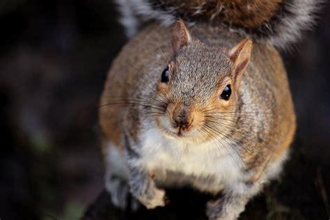 brown squirrel   brown wooden train miniature