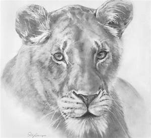 Pencil Drawings Of Lions Face Time Lapse Drawing Of A Lion ...