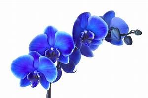 Hausmittel Gegen Spinnmilben : orchideen l use l use an orchideen was tun schildl use bild 1 von 10 l use orchideen wolll use ~ Whattoseeinmadrid.com Haus und Dekorationen