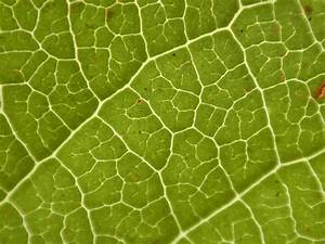 Image*After : textures : leaf vein texture pattern green