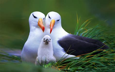 Animals And Birds Wallpaper - animals birds seagulls baby animals wallpapers hd